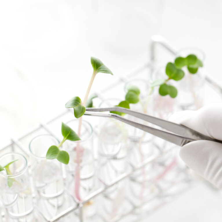 plants being grown in a test tube